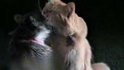 Смотреть Кошки делятся любовью