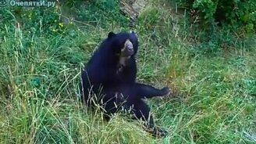 Медведь смачно чешется