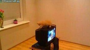 Что взять с домашнего кота смотреть видео прикол - 0:21