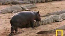 Гроза крокодилов смотреть видео прикол - 1:33