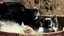 Смотреть Собака приютила котят