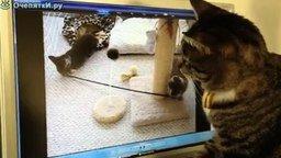 Котята потерялись смотреть видео прикол - 2:20