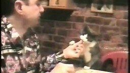 Смотреть Наглый котяра за столом