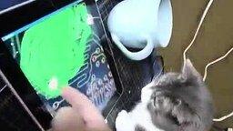Смотреть Крутая игрушка для котяры