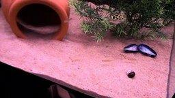 Смотреть Рыбки охотятся за лазером