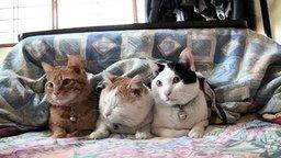 Смотреть Замучали сонного кота