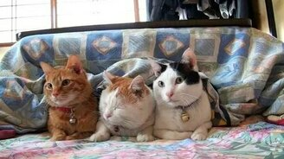 Замучали сонного кота