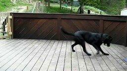 Смотреть Закидали пса мячиками
