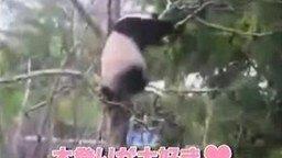 Смотреть Панда кунфу