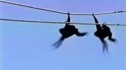 Синхронные обезьяны на канате смотреть видео прикол - 0:17