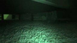 Смотреть Кот-паук в ночи
