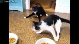 Подборка неадекватных кошек смотреть видео прикол - 3:22