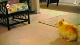 Смешные собаки смотреть видео прикол - 9:50