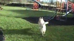 Смотреть Собака катается на детской горке