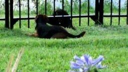 Смотреть Пёс и выдра