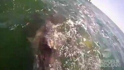 Любознательные киты смотреть видео прикол - 2:28