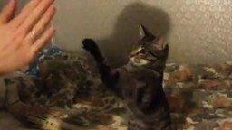 Игра с котом в ладушки