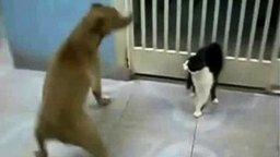 Звёздный котяра смотреть видео прикол - 0:47