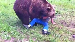 Смотреть Безумные игры с медведем