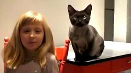 Смотреть Самостоятельный кот и холодильник