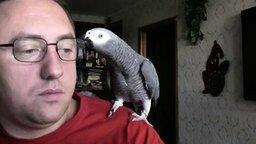 Беседа с попугаем по-мужски смотреть видео прикол - 4:27