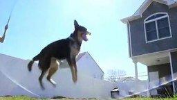 Смотреть Прыгучий игривый пёс