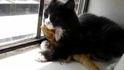 Смотреть Кошке нравится ящерица
