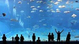 Гигантский аквариум смотреть видео - 4:34