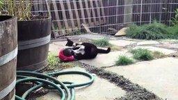 Смотреть Забавный щенок и кот-ловкач