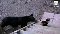 Бесстрашная кошка и медвежонок смотреть видео прикол - 0:32