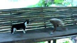 Смотреть Обезьянка против кота