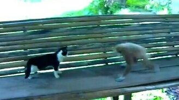 Обезьянка против кота смотреть видео прикол - 1:22