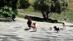 Смотреть Необычная у собак компания