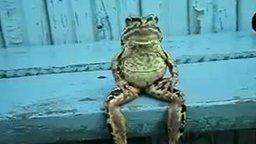 Смотреть Лягушка на скамейке