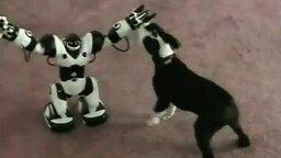 Пёсик и страшный робот смотреть видео прикол - 0:30