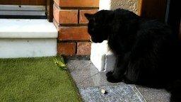 Чёрный кот и храбрый богомол смотреть видео прикол - 5:17