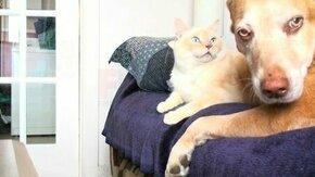 Смотреть Вредный котяра