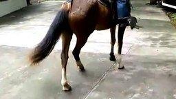 Смотреть Катание на лошади пошло не по плану