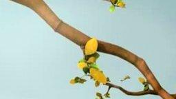 Смотреть Жизнь груши