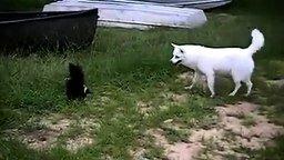 Смотреть Белый пёс против чёрного скунса