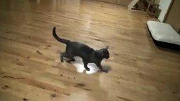Смотреть Кошаки в замедленном прыжке