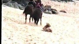Смотреть Пёс и лошадь