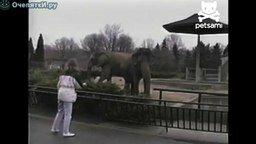 Смотреть Поиграла со слоном