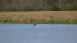 Орёл умеет плавать! смотреть видео прикол - 2:04