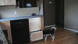 Смотреть Пёс и кухонные ящики