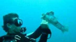 Операция спасения рыбы-шар смотреть видео прикол - 2:22