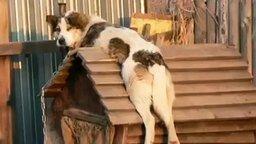 Пёс кайфует на будке смотреть видео прикол - 0:40