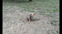 Смотреть Собака-брейкдансер