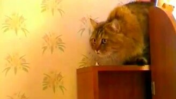 Кот дрессирует мальчишку смотреть видео прикол - 0:37