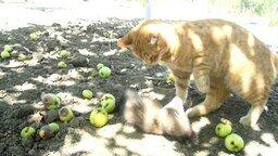 Смотреть Хорёк и кошка